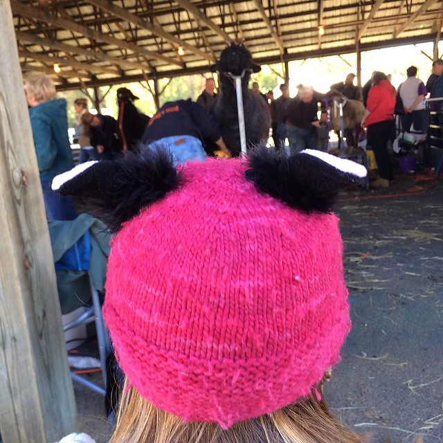 Watching a sheep get shorn. She kinda had matching ears to this one! #latergram