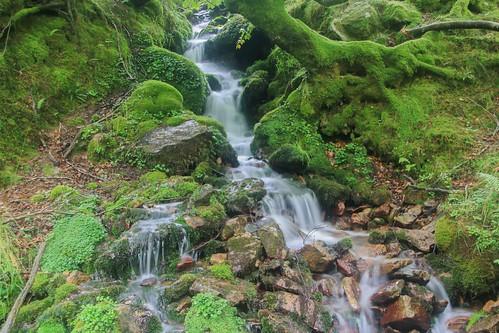 Parque Natural de #Gorbeia #DePaseoConLarri #Flickr - -922