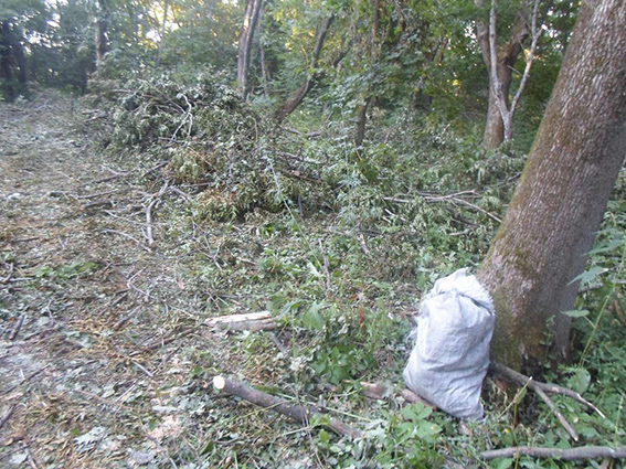 лес дровосеки 2