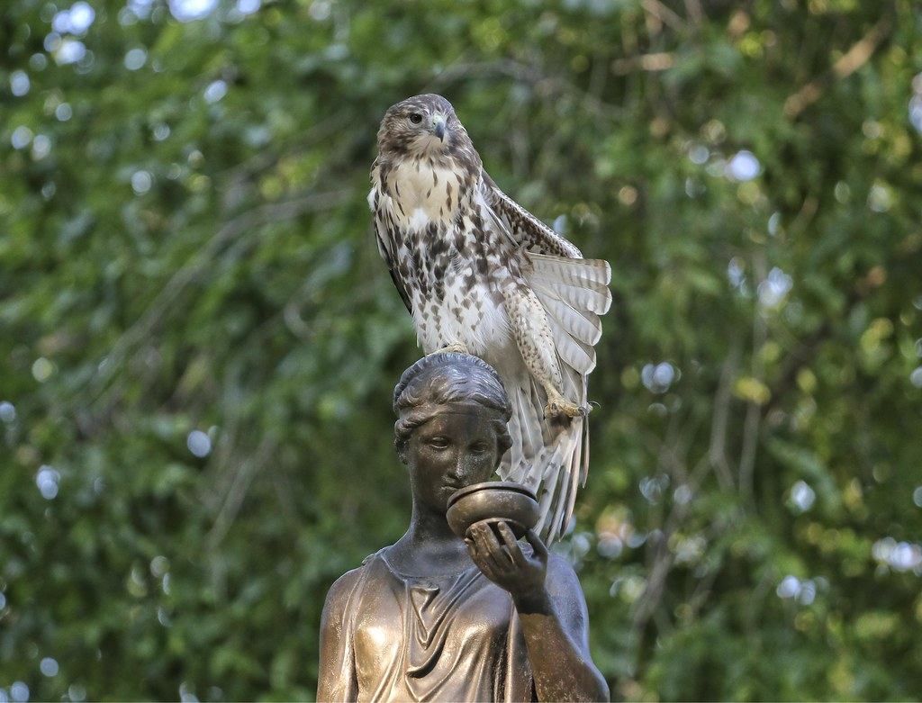 Fledgling on the Temperance fountain