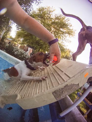 GoPro Pool-8791