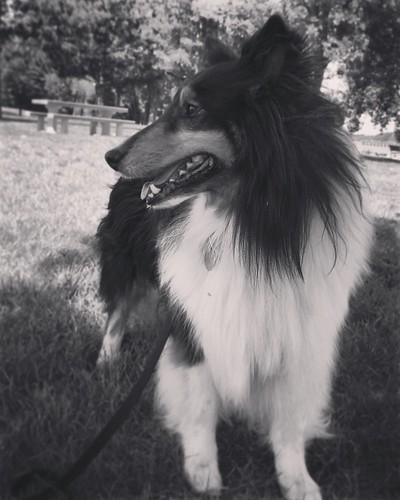 Jasper, side profile, black and white