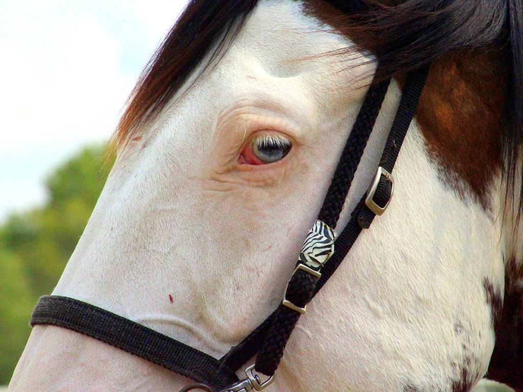Blue the pony.