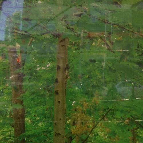 "From ""Green Leaves"" by John Packman #toronto #yongeandbloor #publicart #johnpackman #green #leaves #stollerys"