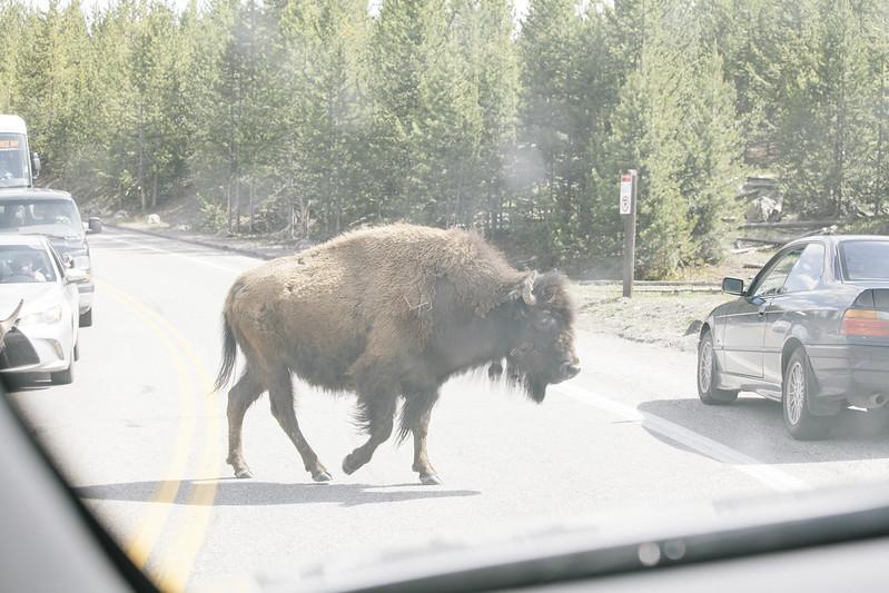 Montana_May16_136