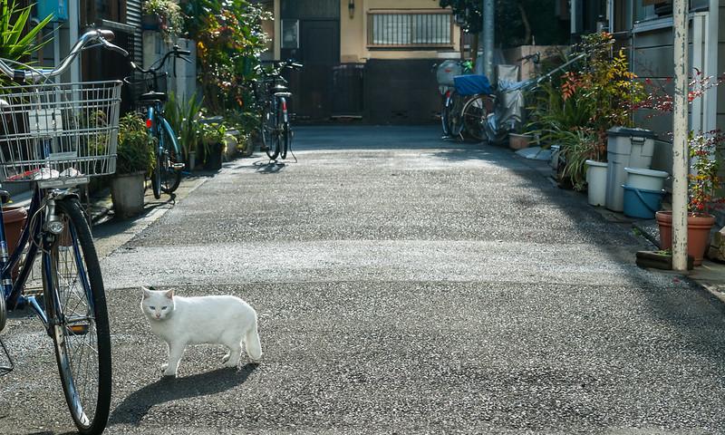 a cat in Kamata.