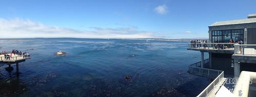 160703f Monterey Bay Aquarium _061