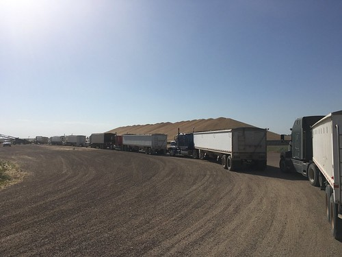 Some long lines at Scoular in Idalia, CO.