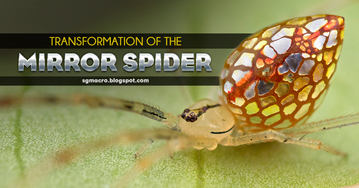 Transformation of the Mirror Spider