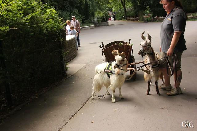 Besuch Tierpark Friedrichsfelde 20.07.201658
