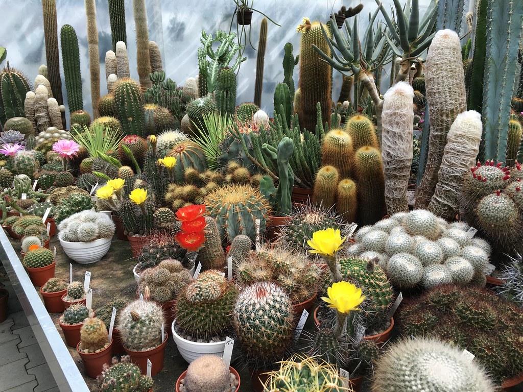 Ha-Ka-Flor - cactus et plantes grasses 28107105180_34b695440b_b