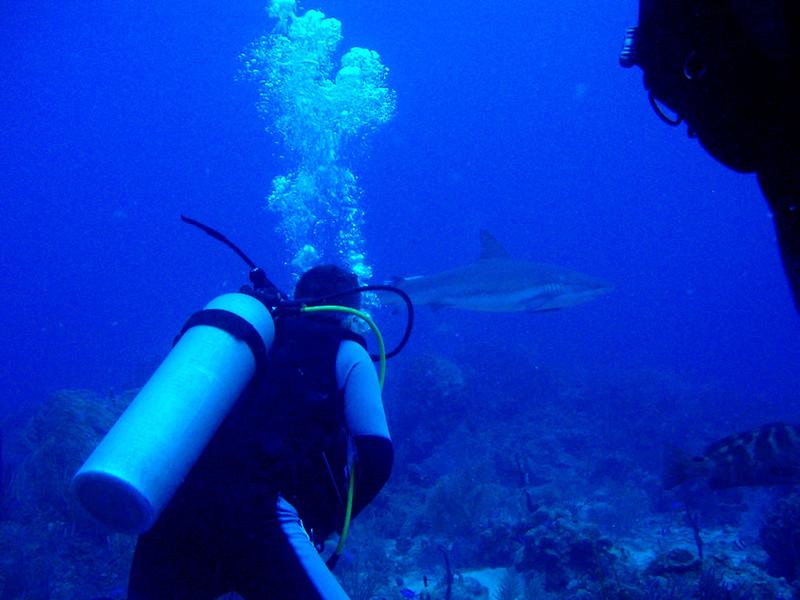 Un momento final para intentar bucear junto a los tiburones.