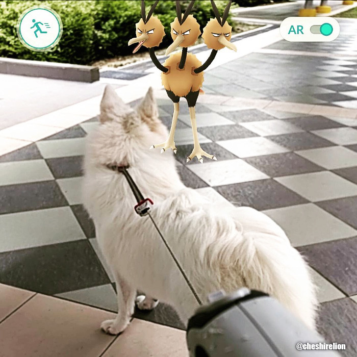 pokemon go sg japanese spitz