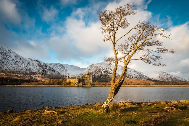 Castle...tree....tree...castle.