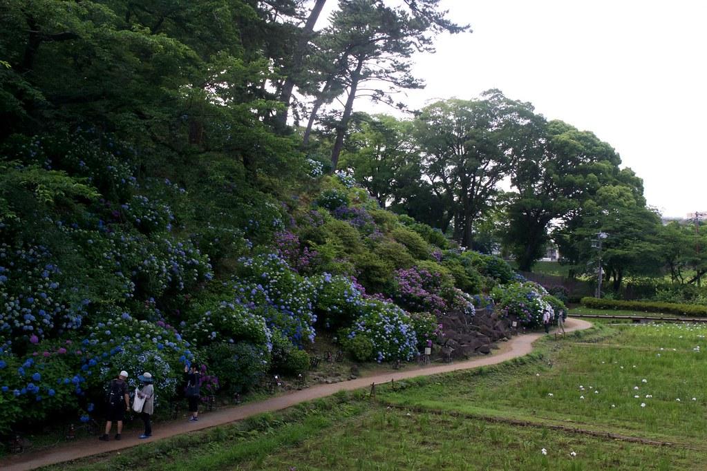 Road Trip Odawara garden