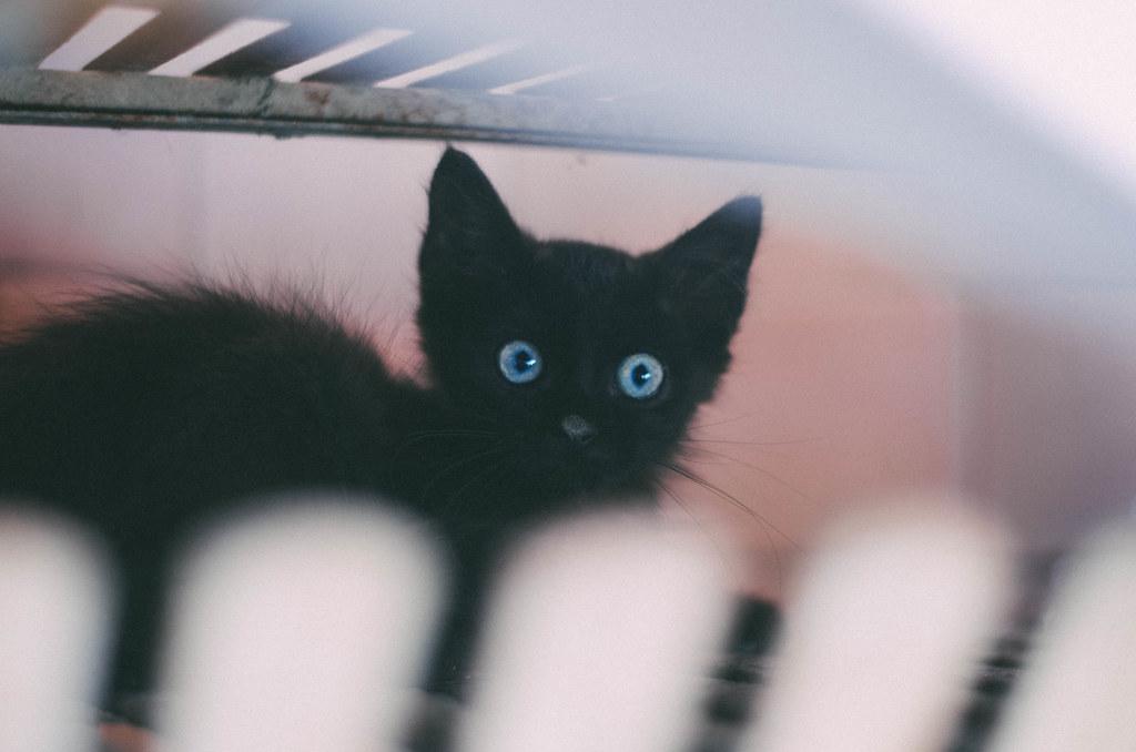 blackkitty