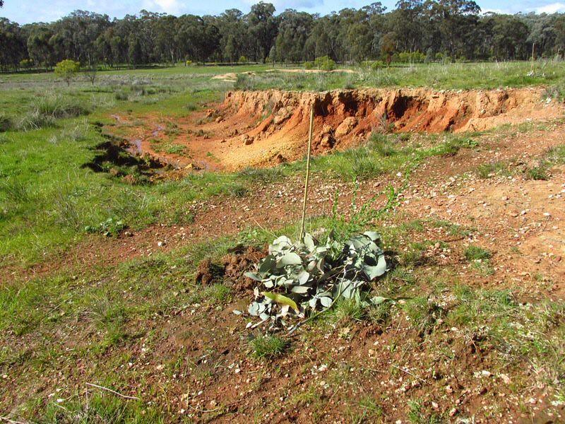 Grasslands erosion site 1