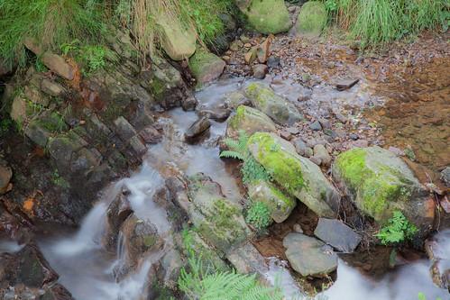 Parque Natural de #Gorbeia #DePaseoConLarri #Flickr - -7988