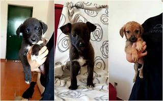 I cuccioli in cerca di casa