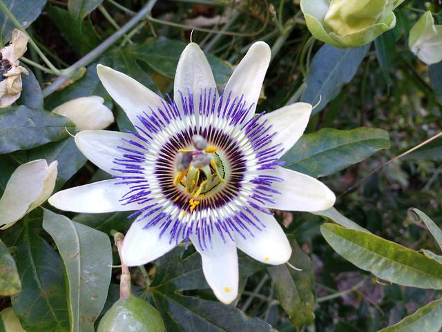 HT10_S_Flower