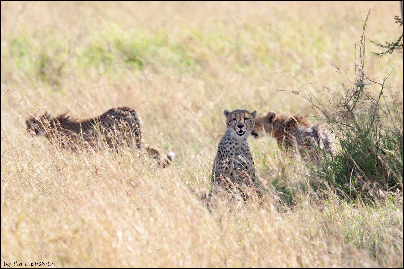 2016-06-29_1D_Serengeti_189_web