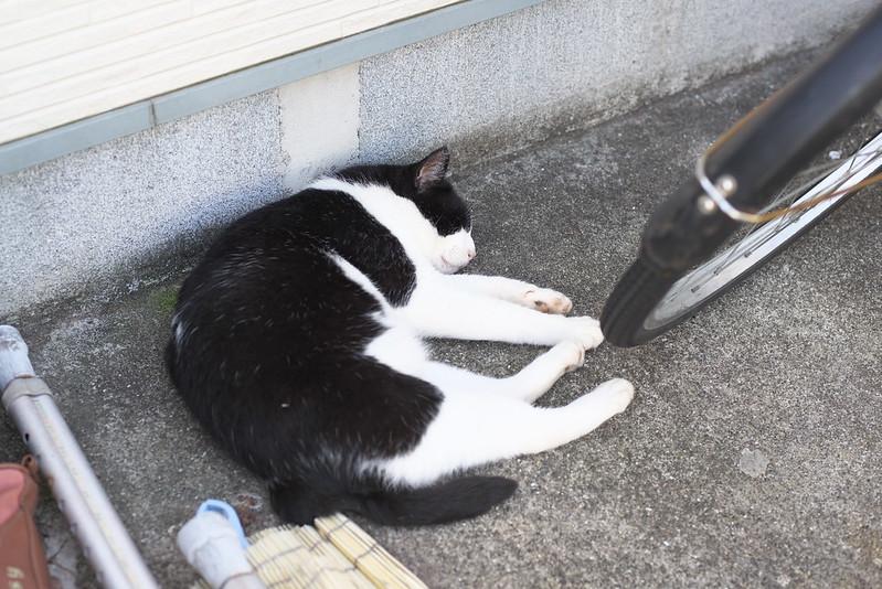 東京路地裏散歩 目白のネコ 2016年7月18日