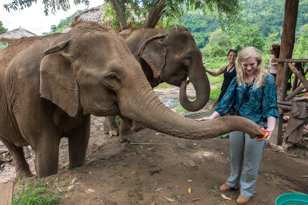 Care for Elephants-01343-3