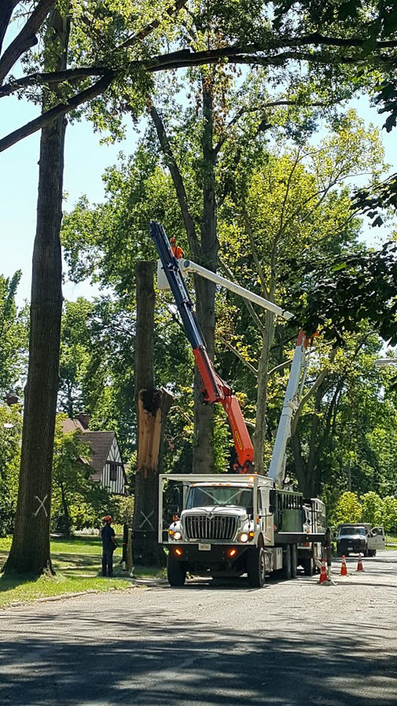 city removes broken trees 02 - Cleveland Heights microburst - 2016-08-29