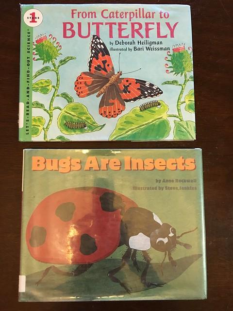 Bug Camp Summer 2016