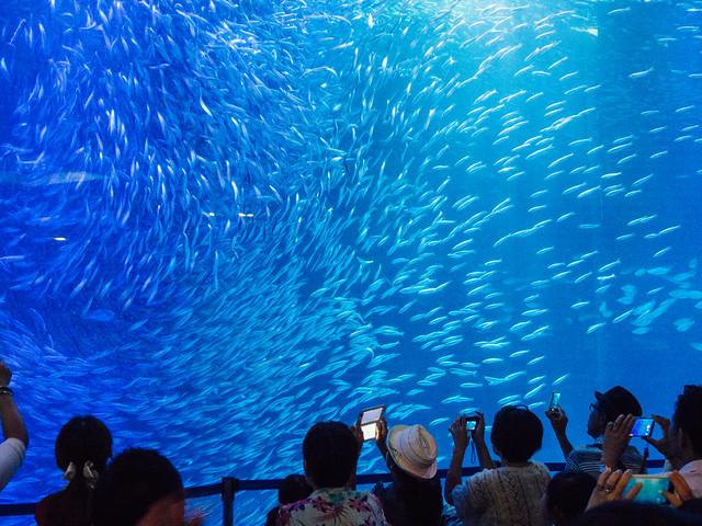 160730_Aquarium-11
