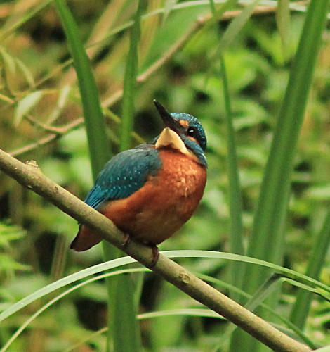 Kingfisher 3016