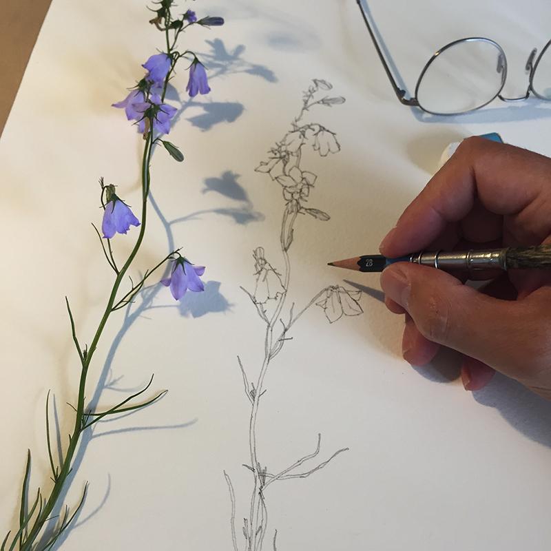 Wild flowers - starting