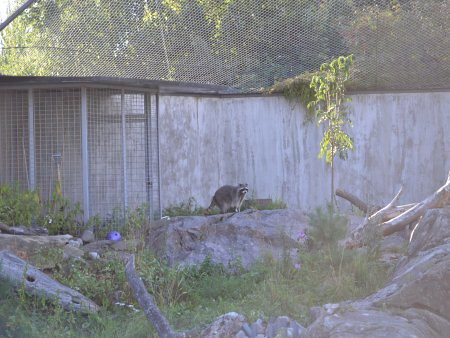 zoo helsinki obiective turistice 9