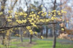 springlike 春らしき