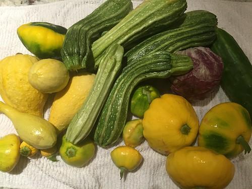 harvest 8-27 IMG_7544