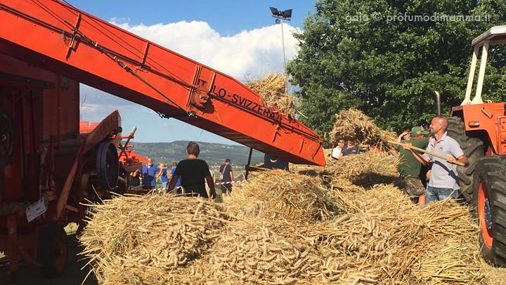 Cerreto Guidi - La battitura del grano
