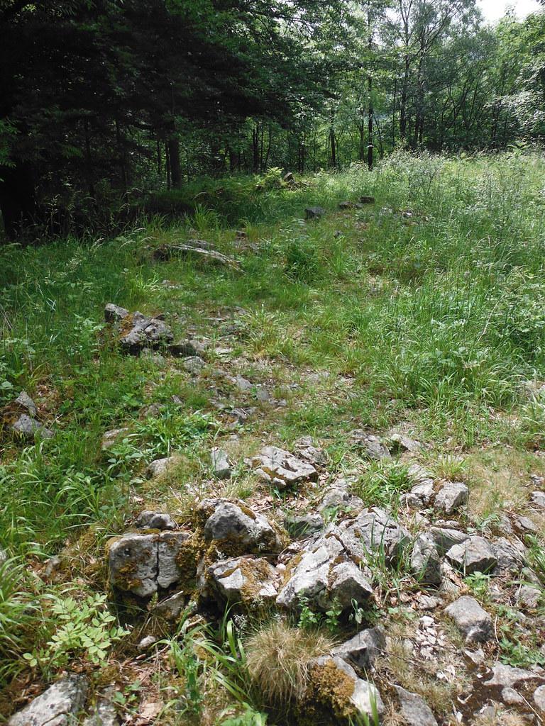 Grass Woods 4