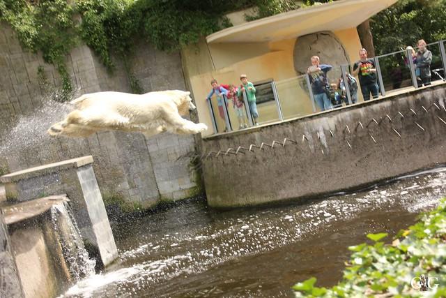 Besuch Zoo Rostock 09.07.201695