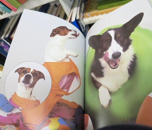 inside dogs n stuff