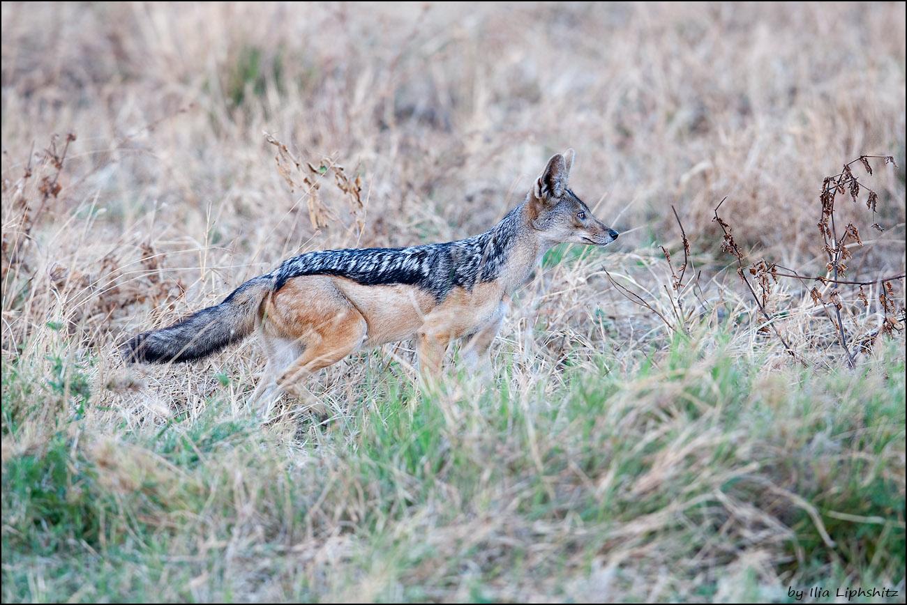 2016-06-30_1D_Serengeti_027_web