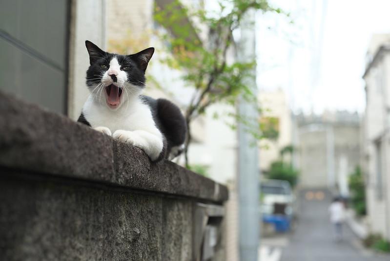 東京路地裏散歩 谷中のネコ 2016年7月16日