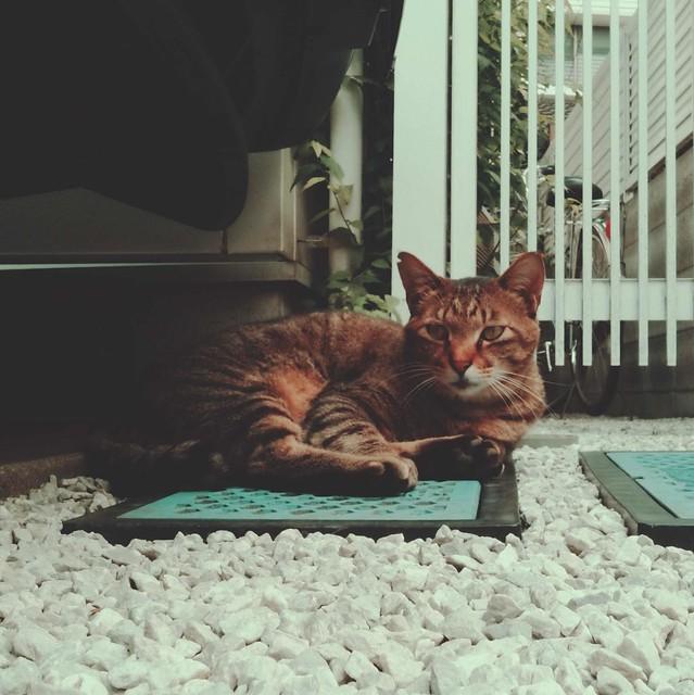 Tabby cat sitting on gravel(2)