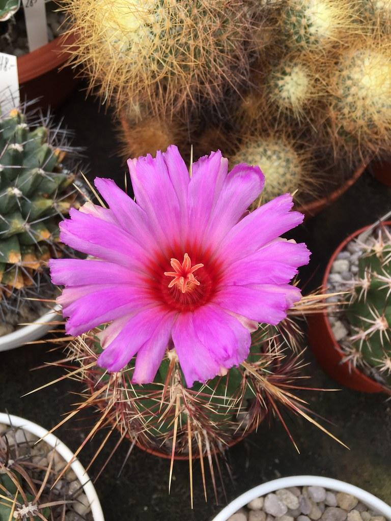 Ha-Ka-Flor - cactus et plantes grasses 28107022780_660a8e4647_b
