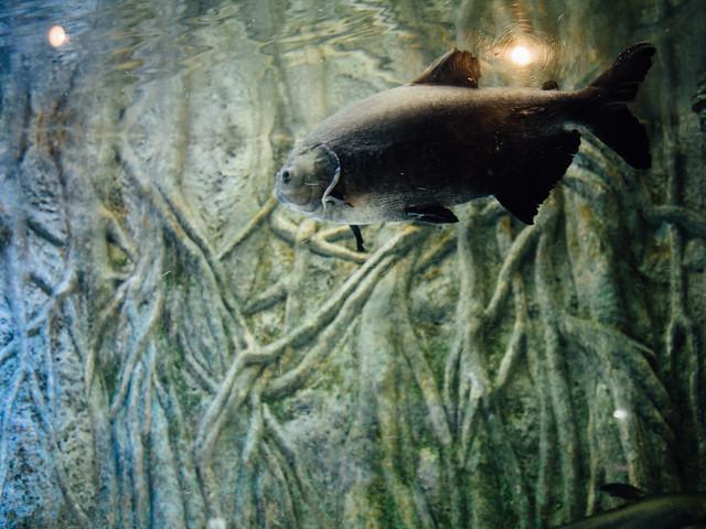 160810_takeshima_aquarium-9