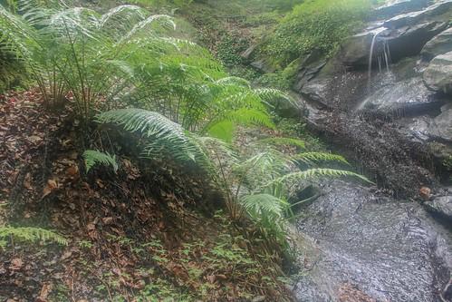 Parque Natural de #Gorbeia #DePaseoConLarri #Flickr - -874
