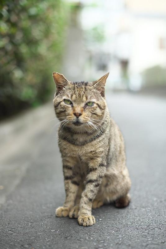 東京路地裏散歩 荒川区のネコ 2016年7月17日