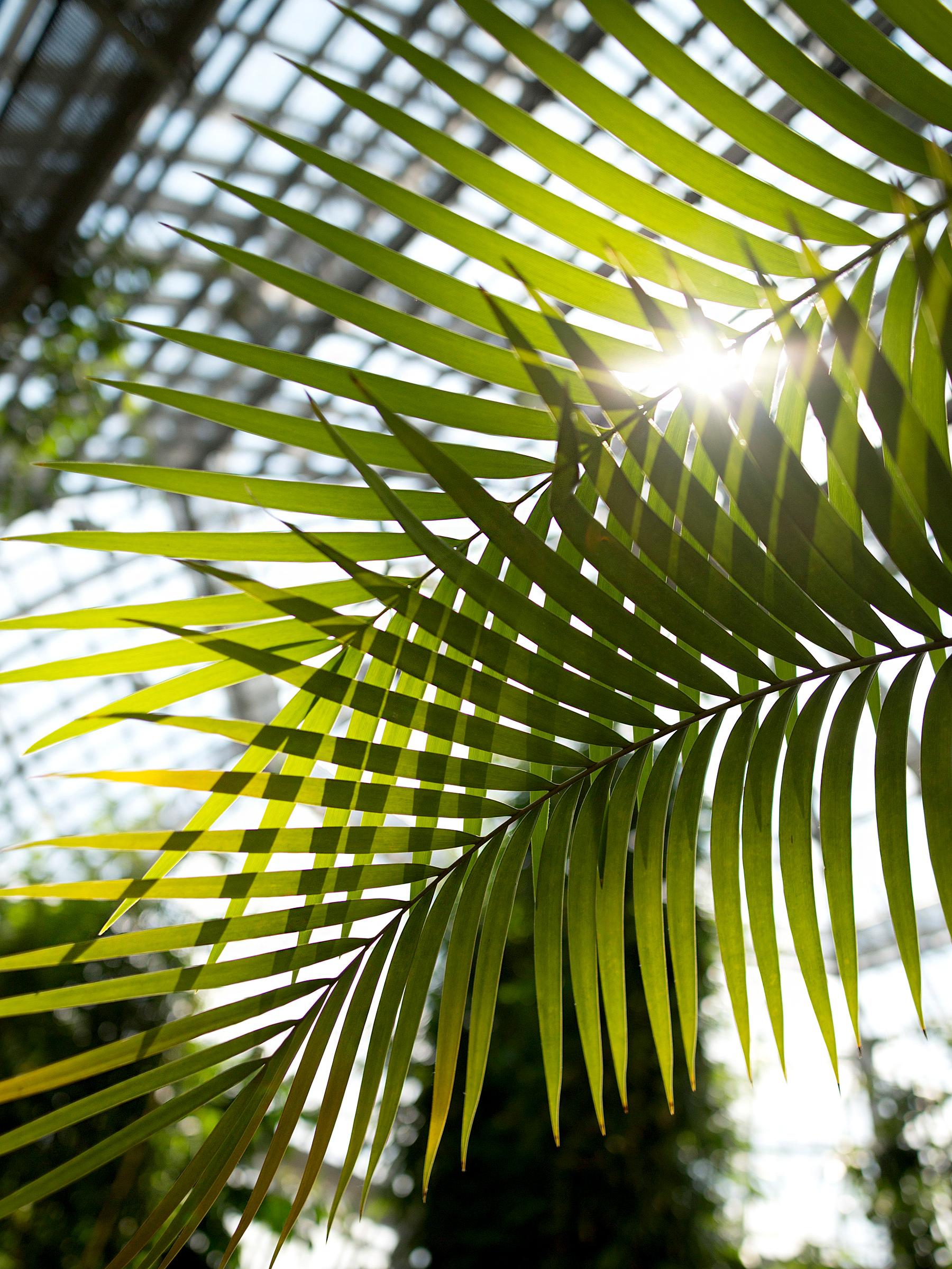 aperol spritz summer aperitif drink cocktail recipe personal urban jungle garden palm tree holiday feeling white crochet dress hm gucci belt saint laurent wedges dionysus ricarda schernus fashionblogger 3