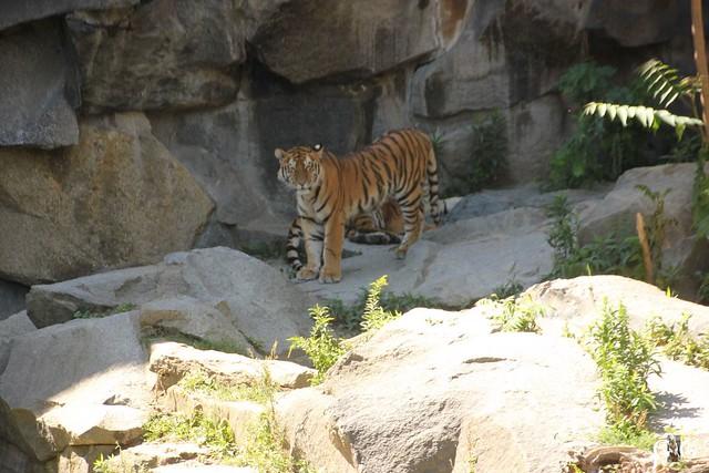 Besuch Tierpark Friedrichsfelde 07.08.16105