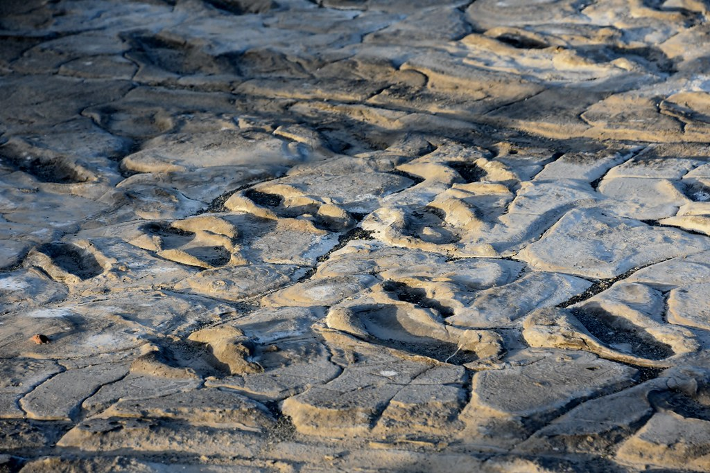 Hominid footprints near Lake Natron (5)