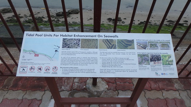 Tidal Pool Units for Habitat Enhancement on Seawalls at Changi